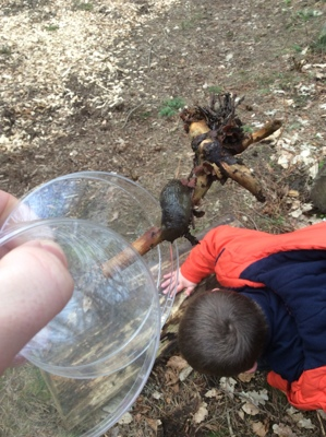 Hamsterley Forest Trip