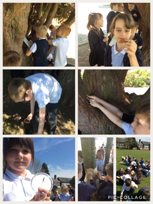 A lovely sunny week in Year 3