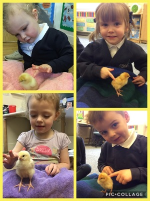 Watch our chicks grow!